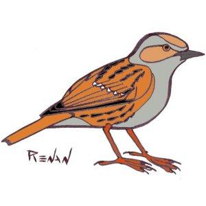 nom d oiseau commencant par k