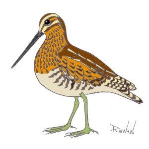 Coloriage Oiseau Sur Arbre.Les Oiseaux En Fiches Coloriages Photos Et Dessins Avec Pouyo