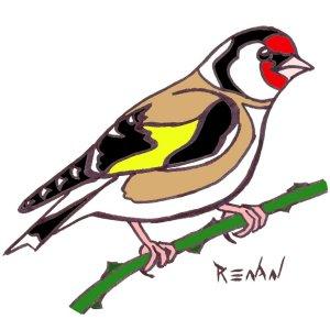 Les oiseaux en fiches coloriages photos et dessins avec - Dessin oiseau en vol ...