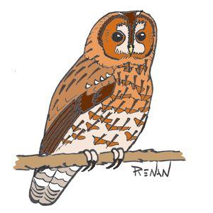 Les oiseaux en fiches coloriages photos et dessins avec pouyo - Chouette a dessiner ...