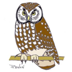 Les oiseaux en fiches coloriages photos et dessins avec - Dessins de chouette ...