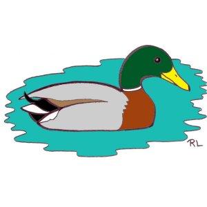 Les oiseaux en fiches coloriages photos et dessins avec for Couleur du canard