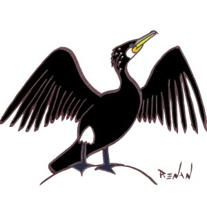 coloriage de grand cormoran