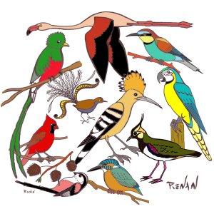 Les oiseaux en fiches coloriages photos et dessins avec pouyo - Dessiner un oiseau en maternelle ...