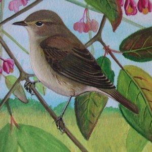 Les oiseaux en fiches coloriages photos et dessins avec for Oiseau par la couleur
