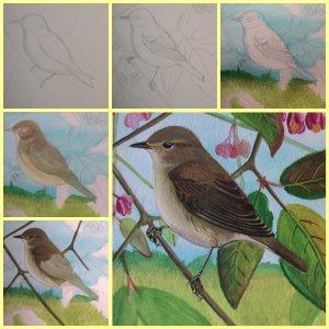 les oiseaux en fiches coloriages photos et dessins avec With comment faire des couleurs avec de la peinture 8 les oiseaux en fiches coloriages photos et dessins avec
