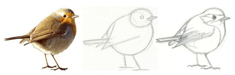 Oiseau dessin facile coloriage chat sorciere bricolage facile pour adulte dessin hibou - Comment dessiner un oiseau facile ...