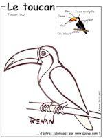 Coloriage Facile Oiseau.Les Oiseaux En Fiches Coloriages Photos Et Dessins Avec Pouyo